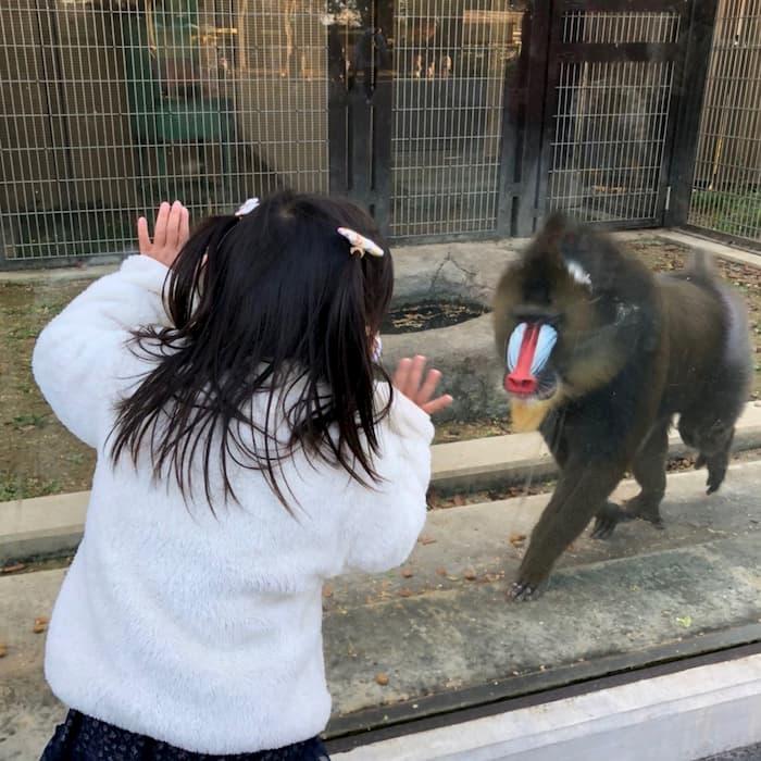 ヒヒと遊ぶ子供