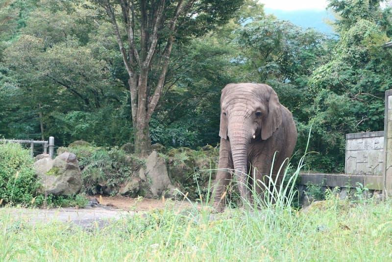 動物の保護に繋がる動物の移動を