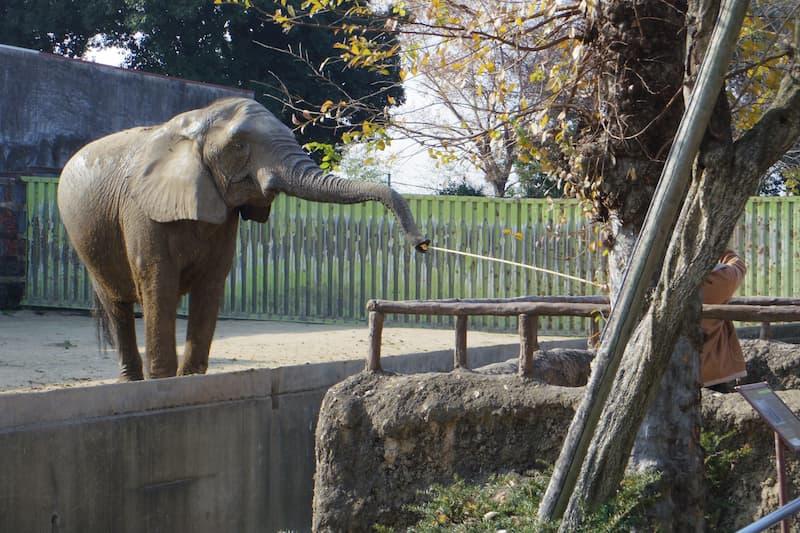 東武動物公園ゾウ