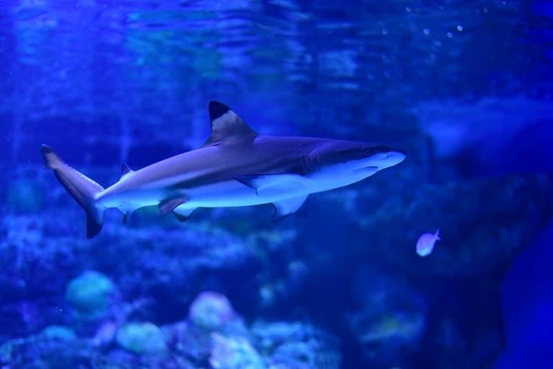アクアパーク サメ