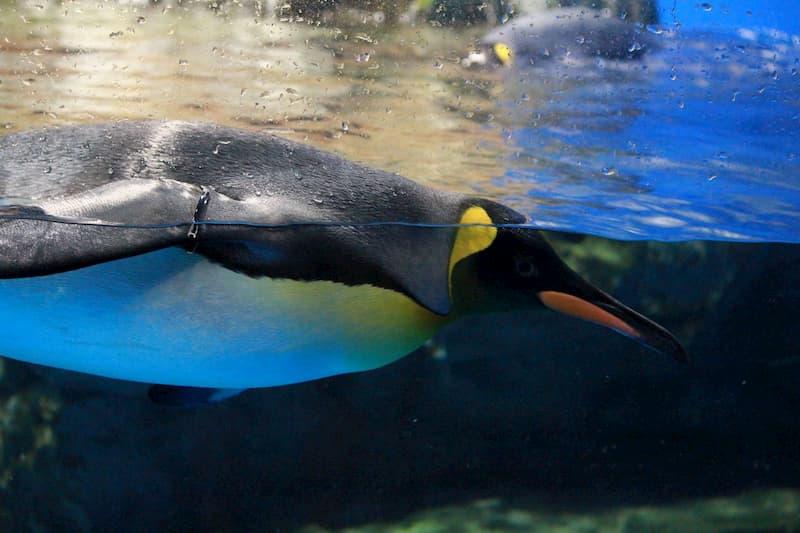 アクアパーク ペンギン