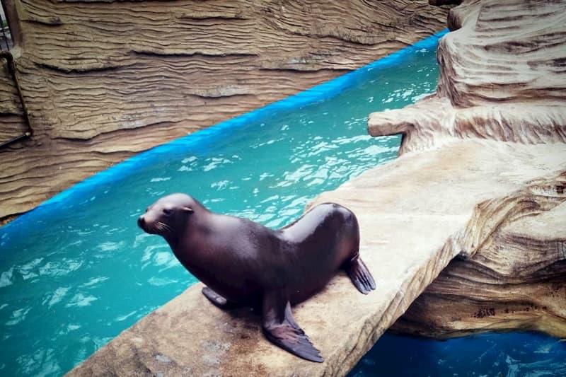 東山動物園アシカ