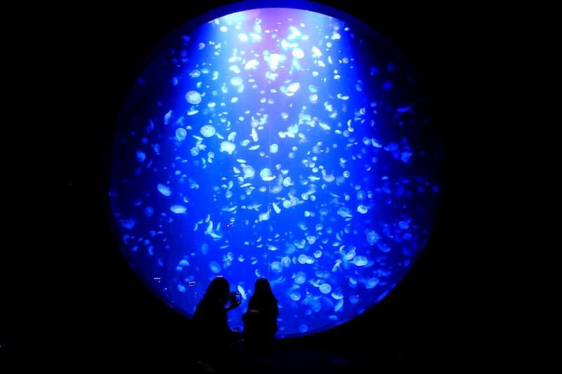 加茂水族館クラゲ水槽
