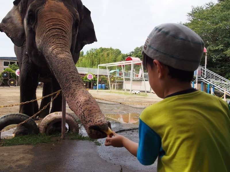 動物園の必要性
