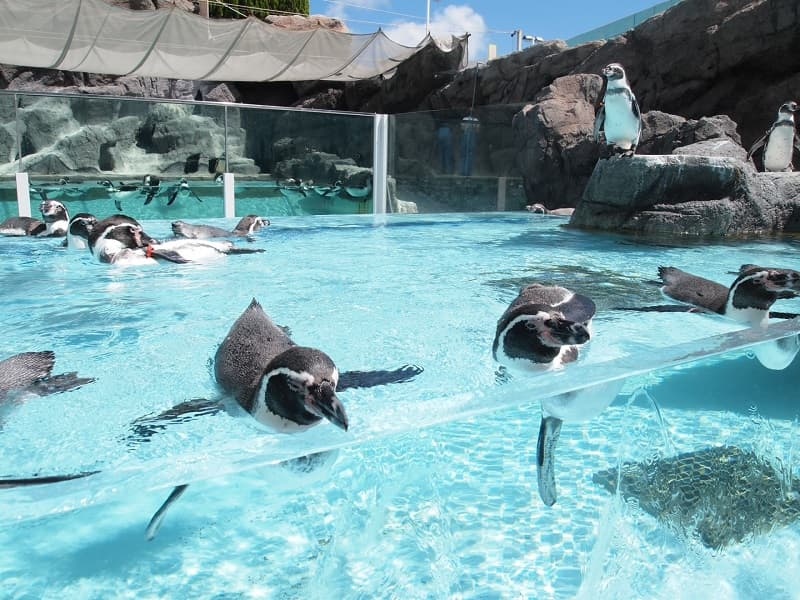鳥羽水族館ペンギン
