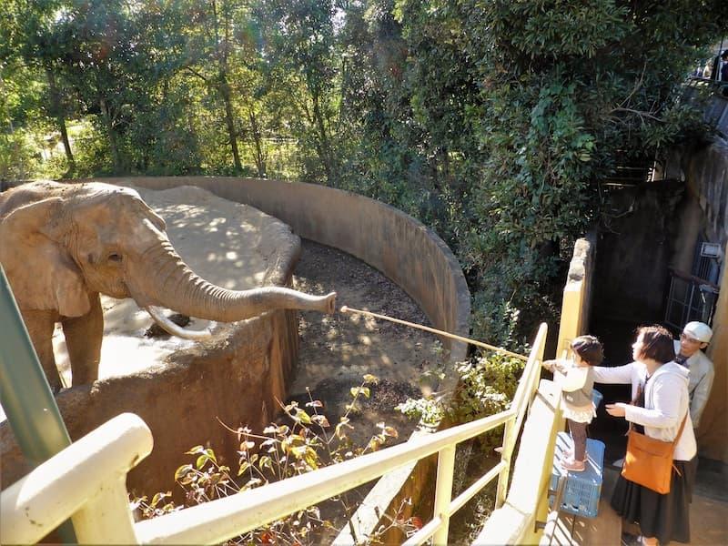八木山動物公園ゾウのエサやり