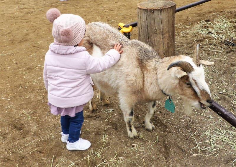 八木山動物公園ヤギのふれあい