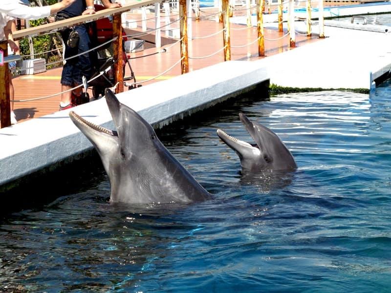八景島シーパラダイスのイルカ